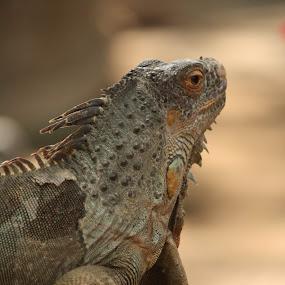 by Arief Ahmad - Animals Reptiles