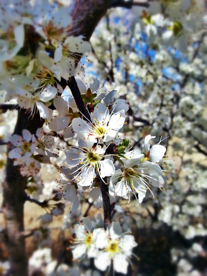 Quaint Blossom  by Gianna Baker - Nature Up Close Flowers - 2011-2013