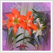 Photo: Country lilies #PhotoShake #intercer #lily #lilies #romania - via Instagram, http://instagr.am/p/L-Lpiwpfg3/