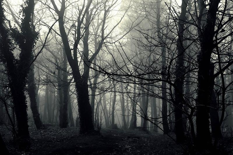 Misty forest di Federica Massa