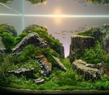 Aquascape Aquarium Design Android Apps On Google Play