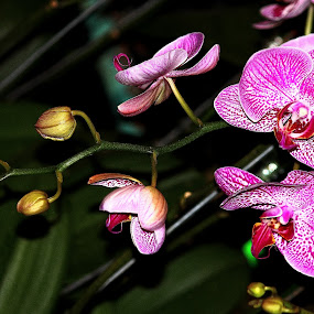 Orchid branch by Nguyen Huu Hung - Nature Up Close Flowers - 2011-2013