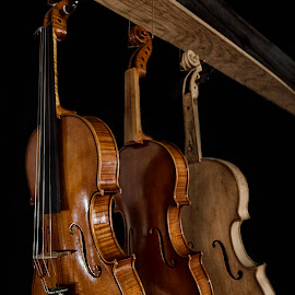 Coming to Life by Andrius La Rotta Esquivel - Artistic Objects Musical Instruments ( musical, violin, art, artistic, musical instruments, artistic objects, photography )