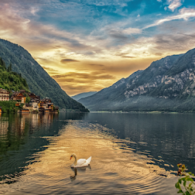 At Sunset by Nitescu Gabriel - Landscapes Travel ( water, europe, mountain, waterscape, beautiful, forest, landscape, sun, mountains, european, sky, sunset, summer, swan, landscapes, austria,  )