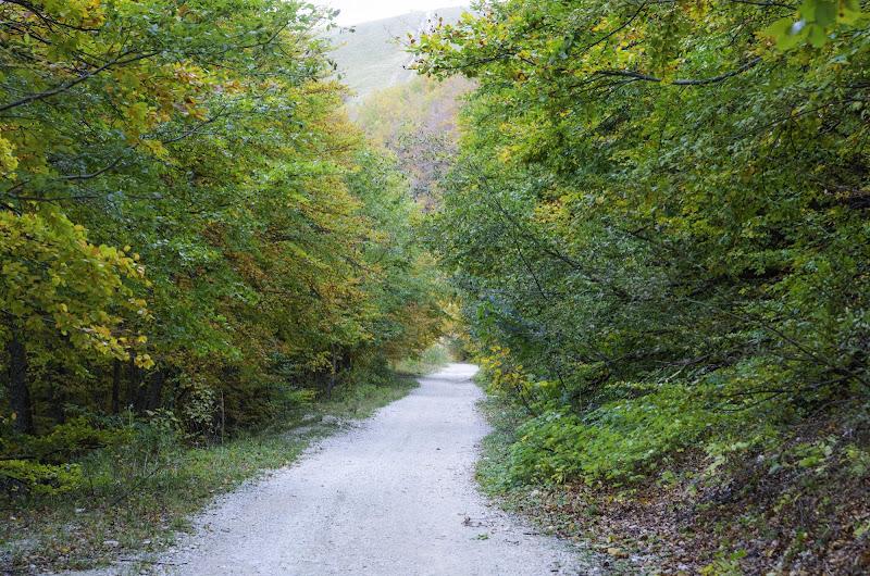 Autumn trails di Debug