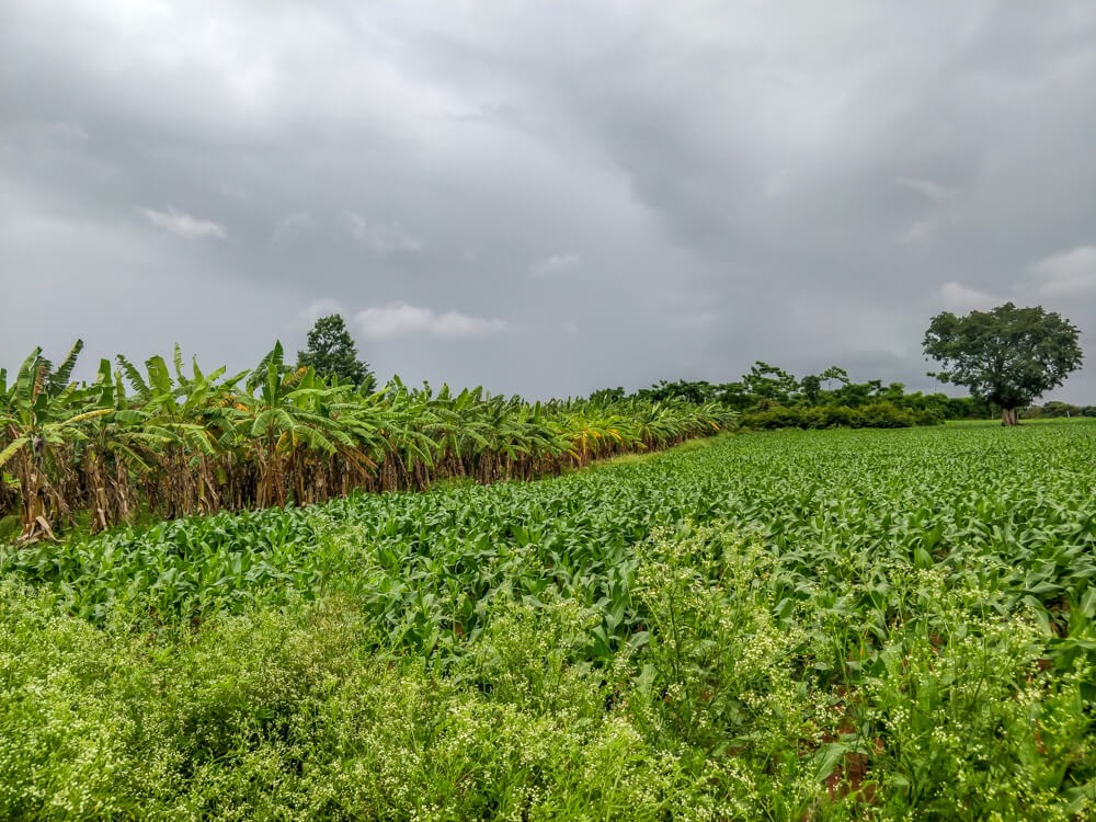 fields+bangalore+to+coorg+route