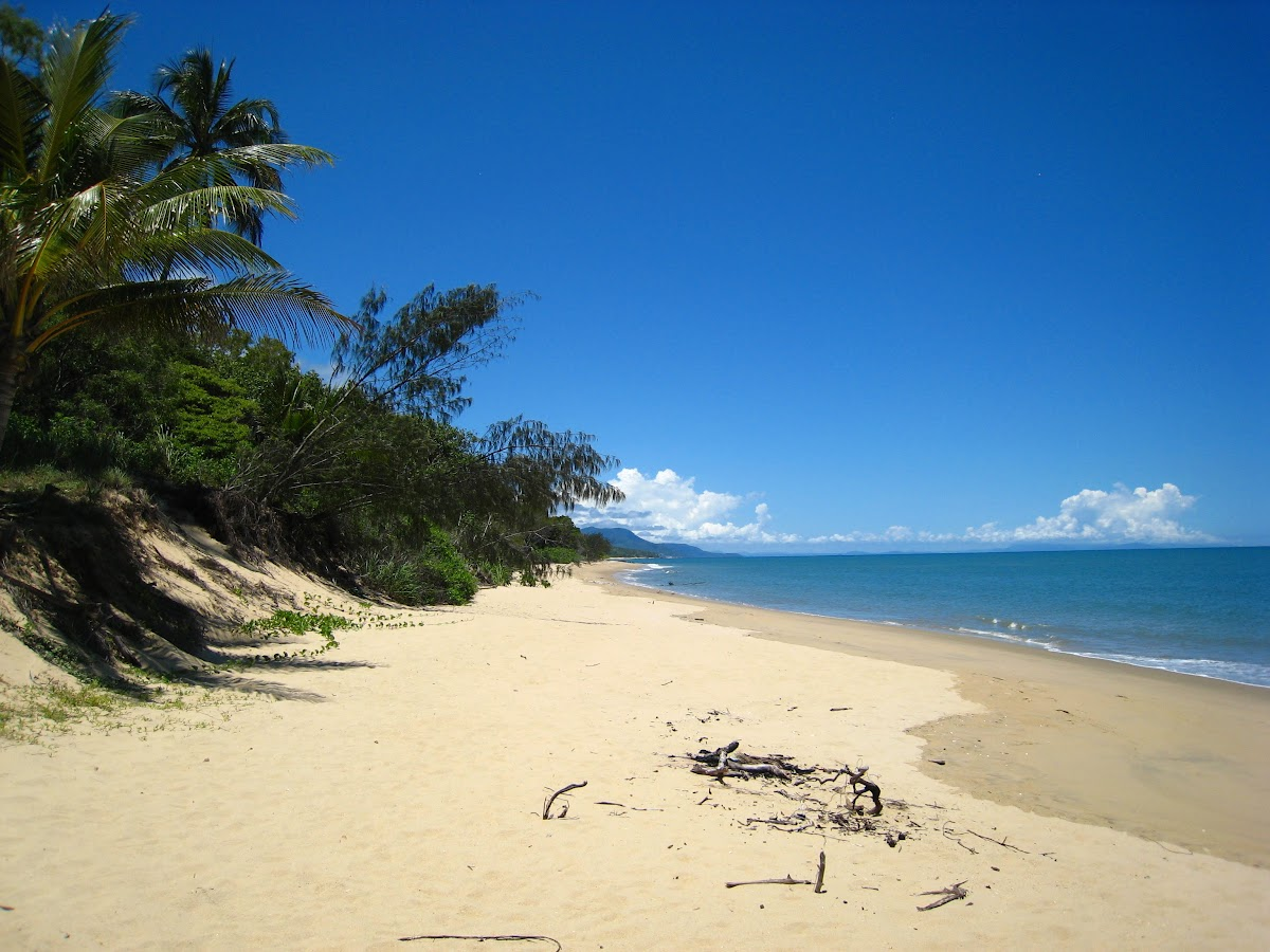 3 Week Australia Itinerary Road Trip National Parks Wildlife // Beach along the Cairns to Cape Tribulation Coast