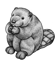 Photo: Plushy Beaver - pen & ink study