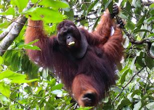 Photo: Richie, Semenggoh Wildlife Preserve Sarawak, Borneo, Malaysia