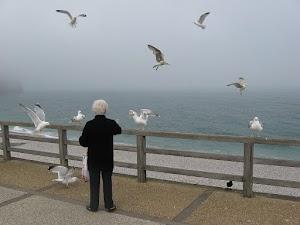 Eine alte Frau füttert Möwen am Meer.