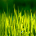 moving grass wallpaper icon