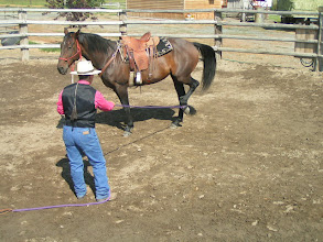 Photo: Here I have put a little 'ask' or pressure on the ring rope, with a clear picture in my mind for the horse to stop and yield her foot. Again, if the horse becomes bothered, ask them forward again, and try again. You need to reward the slightest 'try' or effort in the horse to yield.