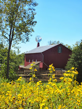 Photo: Golden flowers in front of a red barn and windmill at Carriage Hill Metropark in Dayton, Ohio.