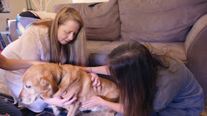 Beloved Pets thumbnail