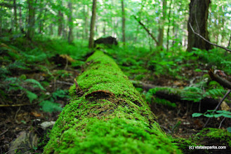 Photo: Mossy log in the forest at Gifford Woods State Park by Carolyn Dean