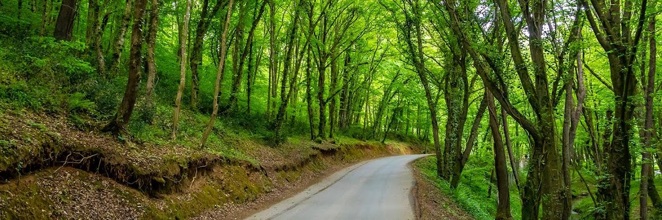Oksijen deposu: Belgrad Ormanı
