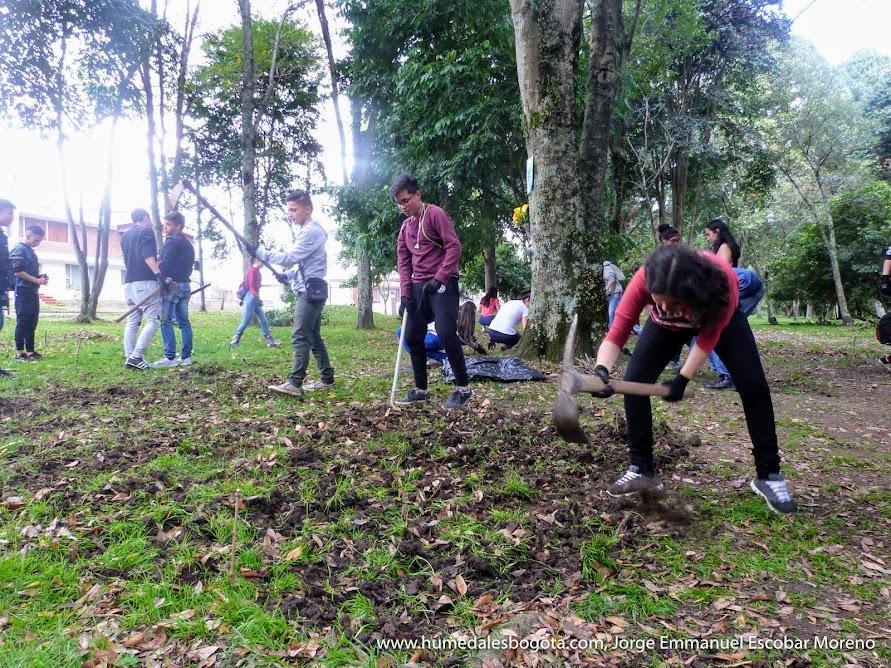 Creando el jardín biodiverso en Bogotá