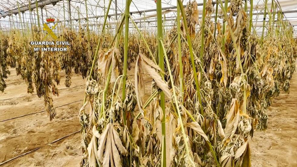 Más plantas en proceso de secado.