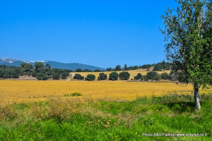 Пейзаж. Нижняя Галилея. Экскурсия в Израиле.