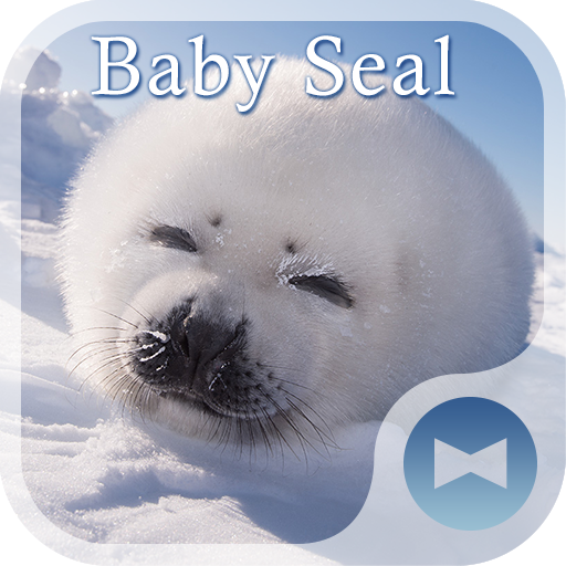 Cute Wallpaper Baby Seal Theme Icon