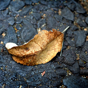 The leaf by Nallely Martinez - Nature Up Close Leaves & Grasses ( contrast, colors, street, leaf )