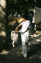 Photo: 11109 鎮江/自由市場/アヒル
