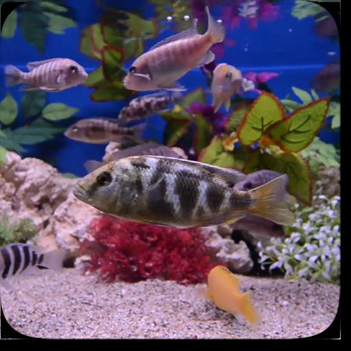 Aquarium Video Wallpaper
