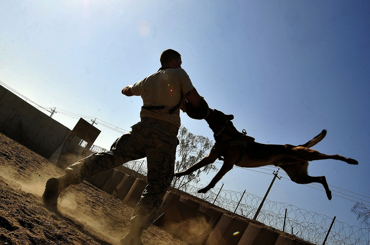 Choose a dog trainer that is insured to mitigate damage
