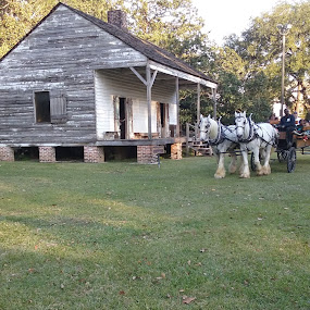 Horses at work by Denise DuBos - City,  Street & Park  Historic Districts ( mules, sugar cane, sugar, horses, crushing mills, port allen sugar cane festival,  )