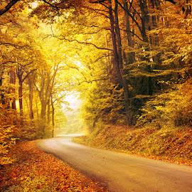 Autumn Journey XXV. by Zsolt Zsigmond - Landscapes Forests ( autumn, colors )