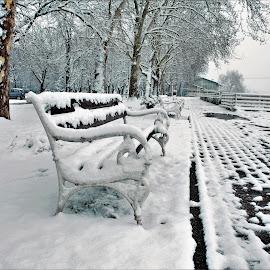 sitting on the park bench by Miroslav Bičanić - City,  Street & Park  City Parks ( winter, promenade, bench, park, snow, river )