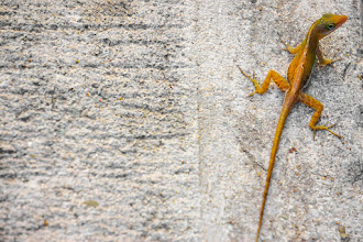 Photo: Lizard on Concrete -- Antigua  My sister said that this makes for a fun desktop background. I'm licensing it Creative Commons non-commercial (CC BY-NC-SA), so you are welcome to use it. Enjoy!