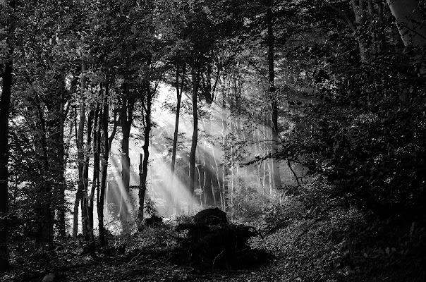 I primi raggi del mattino... di Giuseppe Loviglio
