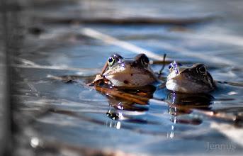 Photo: Was guckst du wie ein Frosch?!  Ethno-Comedy im Teich.