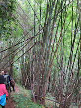 Photo: Bamboo stands