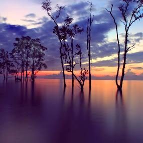 Sunrise  by Havidz Zhurrahman - Landscapes Sunsets & Sunrises ( tree, balikpapan, beach, sunrise, landscapes, natural, pantai ambalat )