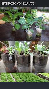Hydroponics Plant - náhled