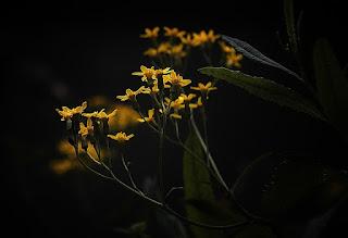 Photo: G'night G+ #flowerphotography #flower