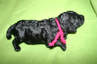 Photo: rosa Halsband - Evy vom Ronthaler Gütl