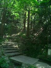Photo: 「とくとくの泉」より道に迷い?翠微に下ること三曲二百歩・・ by YH