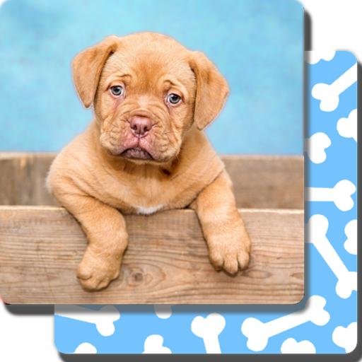 App Insights Puppy Games Kids Cool Puppies For Cool Kids Apptopia