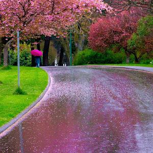 Rainy Day Victoria_Snapseed 2.jpg