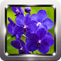 Orchid Flower Wallpapers icon