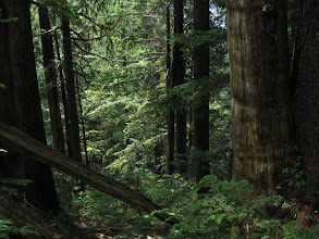Photo: Thick jungle on the trail to the Needles, Lynn headwaters regional park