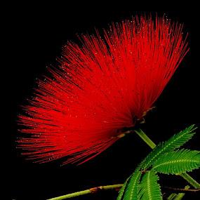 by Louis Heylen - Nature Up Close Flowers - 2011-2013