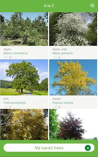 Tree ID - British trees- screenshot thumbnail