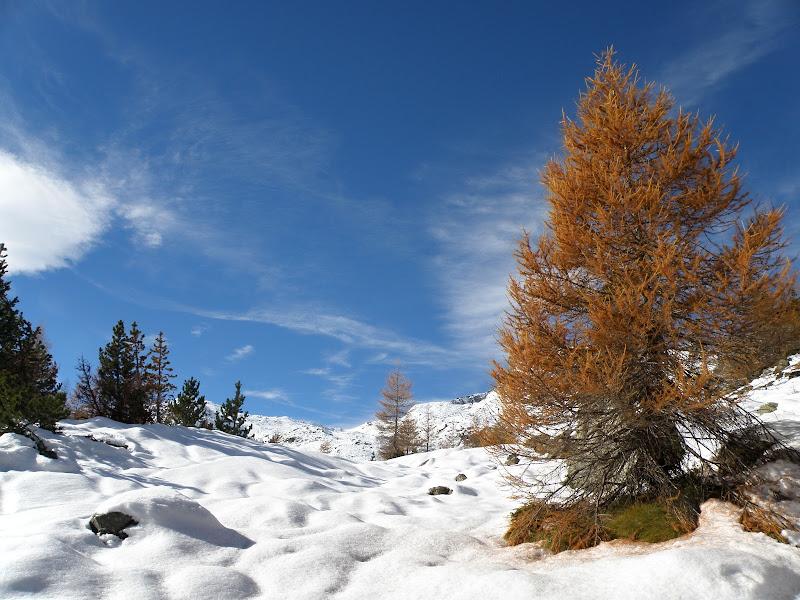 Le prime nevi di Rodema