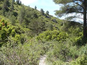 Photo: Le bas du vallon de la Figuière, en regardant vers le bas du vallon.