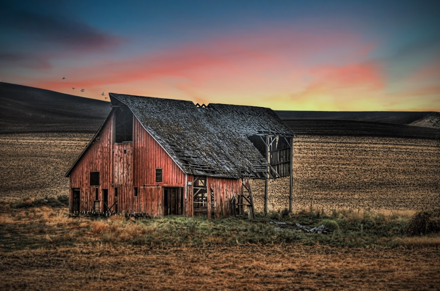 Missing Cupola by Eric Demattos - Buildings & Architecture Decaying & Abandoned ( farm, barn, sunset, eric demattos, fall, cattle, abandoned )