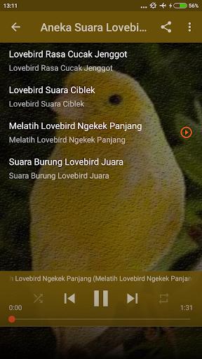 Masteran Lovebird Vs Kenari Mp3 ss3